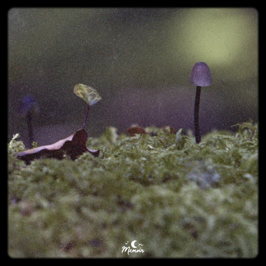 Featherfall | Chillhop.com